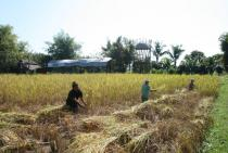 "Harvest at ""The Land"" 